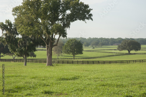 Lush horse farm acreage with paddocks Ocala Florida Canvas