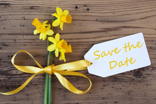 Yellow Spring Narcissus, Label, Text Save The Date
