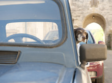 A Dog Waits Patiently For Its Owner In A Classic French Renault 4, France