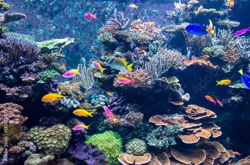 Plakat Kolorowe ryby i koralowce w akwarium