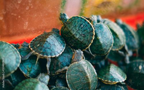 Obraz na plátně  Ninja turtles