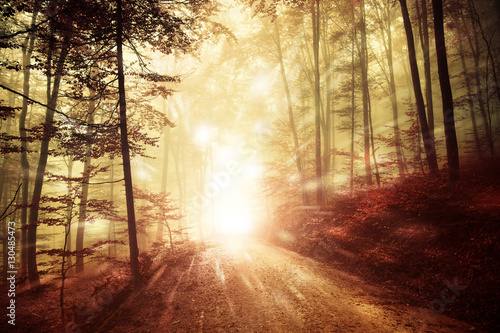 Fotobehang Bossen Artistic bright forest road with firefly lights background. Magic colored woodland fairy tale.
