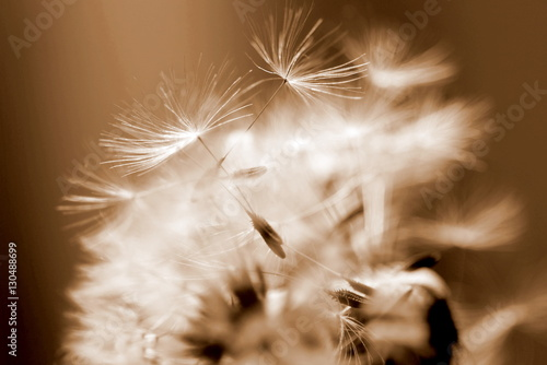 Fotografie, Obraz  Nature background