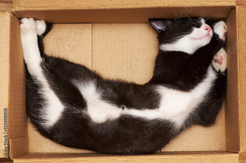 Funny cat sleeping in a box.