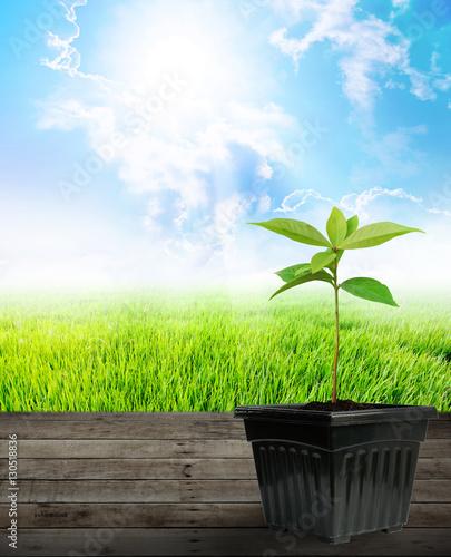 Fotobehang Planten Young plant growing concept for design