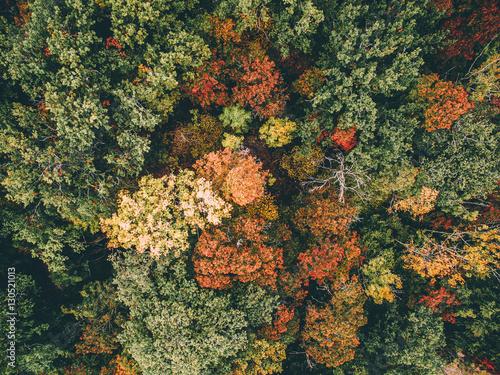 Plakát  Autumn