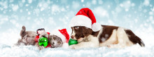 Christmas Puppy And Kitten In ...