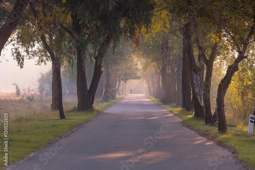 Fototapety, obrazy: Autumn foggy road alley with cyclist far away.