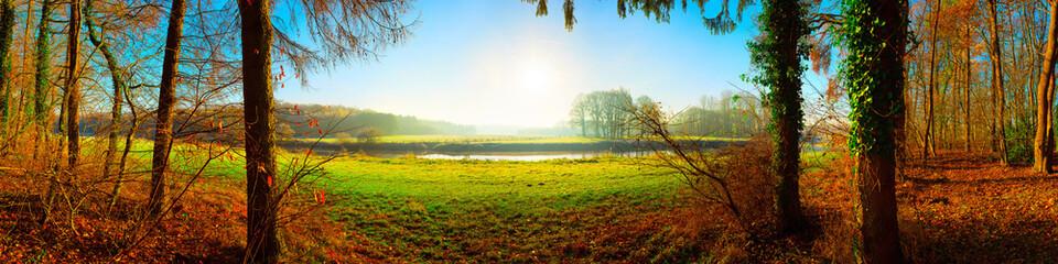 Fototapeta na wymiar Wald im Herbst mit Blick auf eine grüne Wiese im Sonnenschein