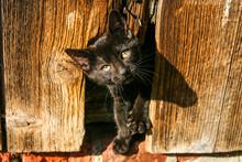 Black Kitten Peeking Out Of Broken Door