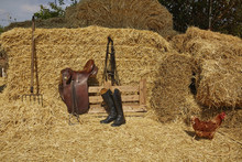 Hen By Cowboy Accessories On Hay