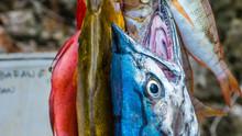 Fresh Fish To Buy On Painemo I...