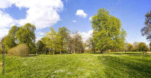 Fototapety, obrazy: Frühling im Park