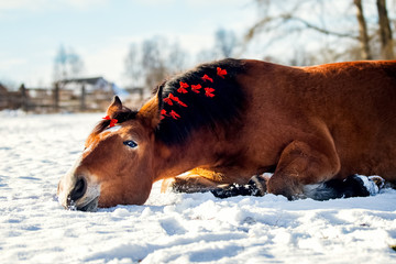 Christmas portrait of a red horse