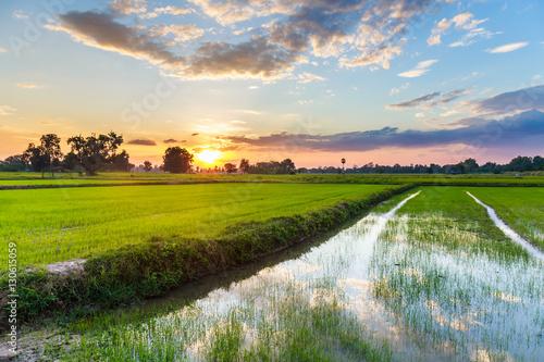 Foto auf AluDibond Landschappen Sunset Rice Farm