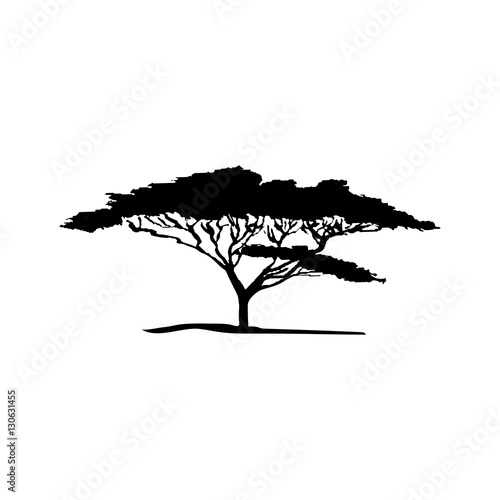 Vector silhouette of acacia tree. African flora Wallpaper Mural