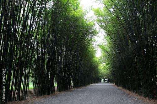 Garden Poster Forest Bamboo Tunnel Reforestation for sustainable development