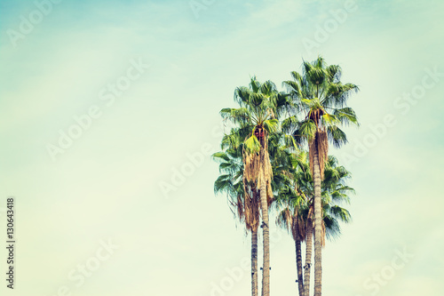 Photo  palm trees in Los Angeles in vintage tone