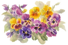 Bouquet Of Violas Watercolor I...