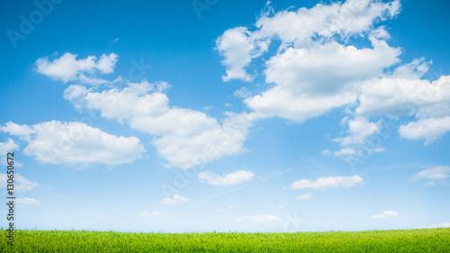 Spoed Foto op Canvas Natuur summer green field landscape