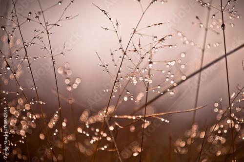 Fotografie, Tablou  Wiosenne kwiaty na łące