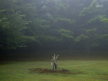 Tree Stump In Fog