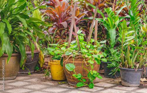 Garden Poster Plant Outdoor flower pots with tropical succulent plants. Streets of Bangkok with flowers, Thailand.