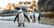 canvas print picture - African penguin ( Spheniscus demersus)
