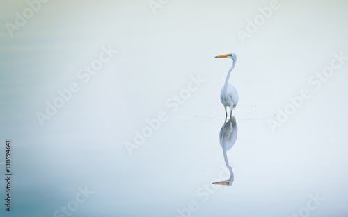 Heron standing in water with reflections Wallpaper Mural