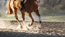 A Horse Riding