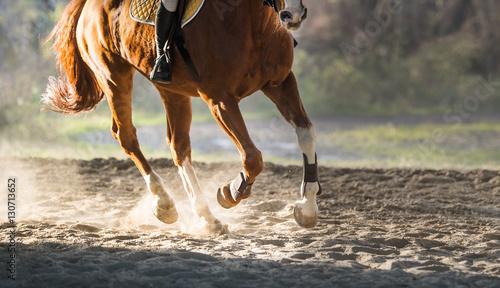 Vászonkép A horse riding