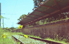 Flowers And Weeds On Train Tra...