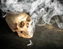 Still Life Skull Of A Skeleton...