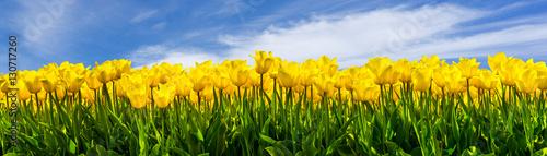 Deurstickers Tulp Gelbe Tulpen
