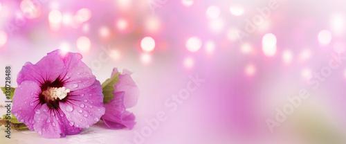 Obraz Panorama with purple hibiscus - fototapety do salonu