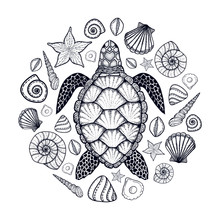 Sea Turtle And Shells In Line ...