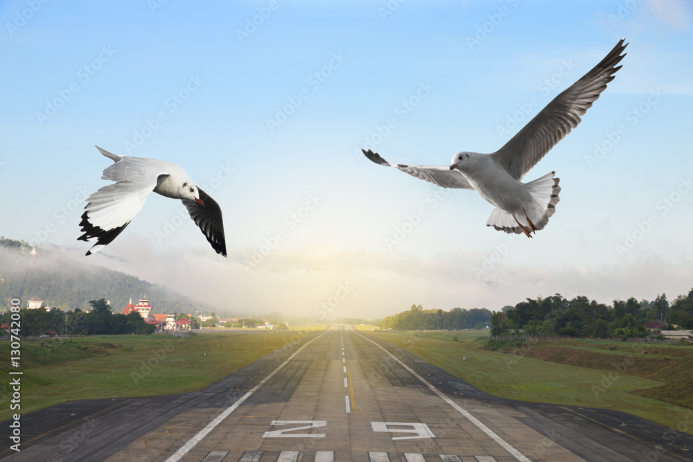 Seagulls flying over the airport runway with mountain in countryside