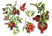 Watercolor Hand Painted Pomegranate Branches And Flowers