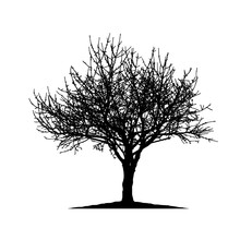 Realistic Cherry Tree Silhouette (Vector Illustration).eps10
