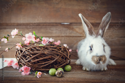 Photo  easter bunny