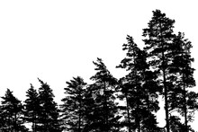 Pine Tree Silhouettes Isolated...