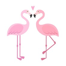Vector Pink Flamingos Illustra...