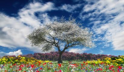 Fototapetasunset and tree