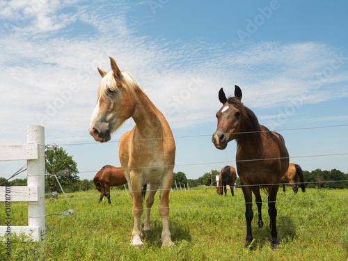 Two horses, big and small, looking over a wire fence