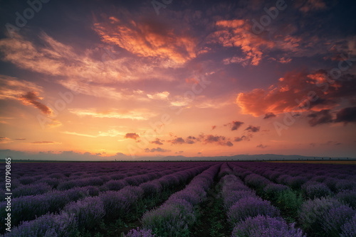 Foto auf Gartenposter Landschappen Lavender field at sunset