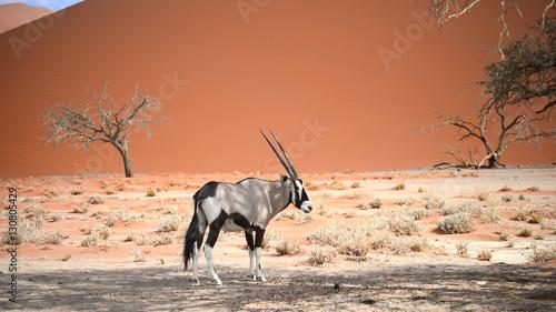 Keuken foto achterwand Antilope oryx in Namibia