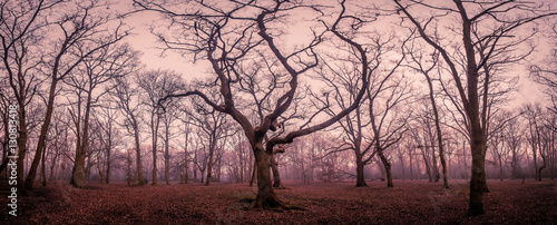Photo Stands Light pink Mystical forest in autumn