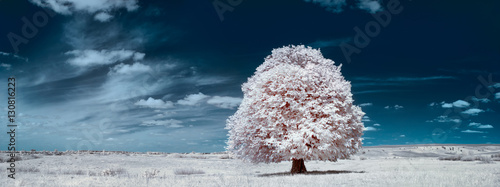 Fotomural  White tree