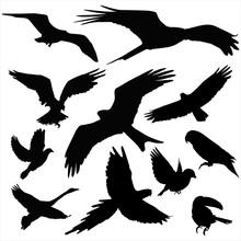 Silhouette Of Birds Vector.
