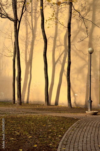 Wall Murals Forest Autumn sketches